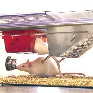 Клетка для крыс NexGen 900