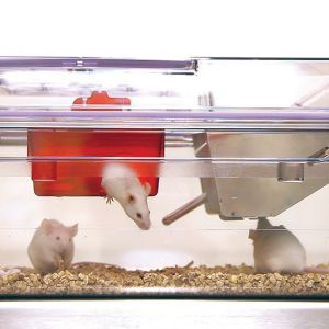 Клетка для мышей NexGen Mouse